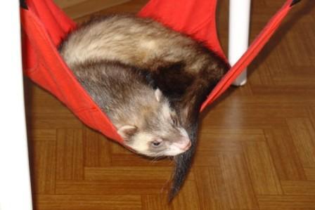 Odpočívá, nebo jenemocná? Foto Johana Sedlářová